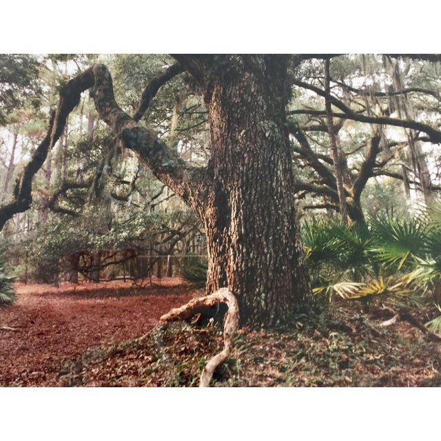 Modern Cumberland Island Photograph by Laurie Coppedge For Sale - Image 3 of 5