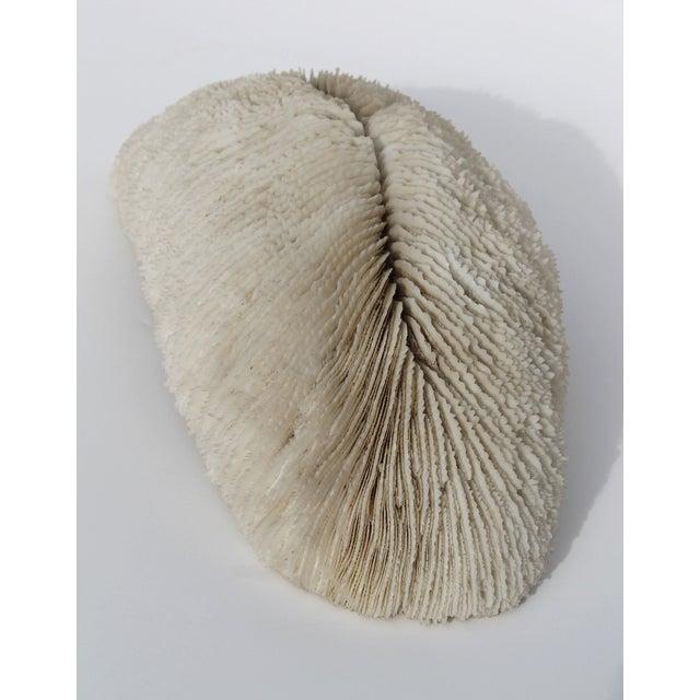 Rare Antique Coral - Image 2 of 4