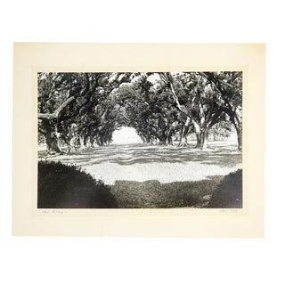1966 Oak Alley Louisiana Photograph For Sale
