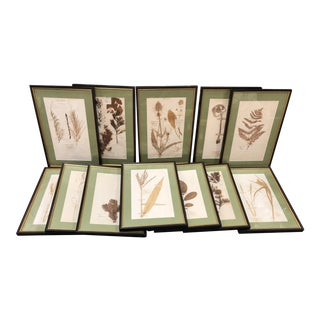 19th Century Antique French Framed Botanical Specimens Herbarium - Set of 12