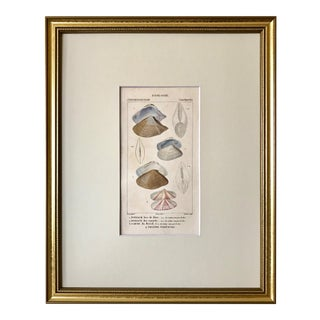 Antique French Print of Colored Engravings Sea Shells by Turpin Paris 1816 For Sale