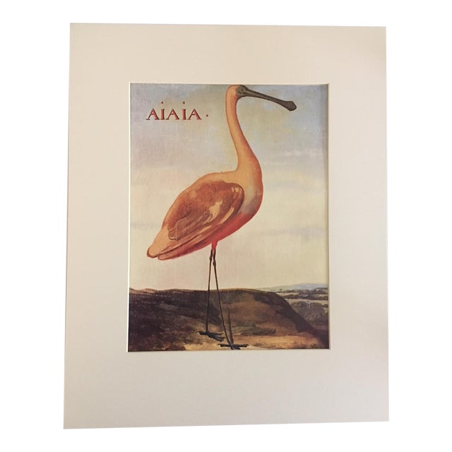 """Albert Eckhout's Roseate Spoonbill - 1970s Print of 1644 Painting From """"Birds of Brazil"""" - Image 1 of 3"""