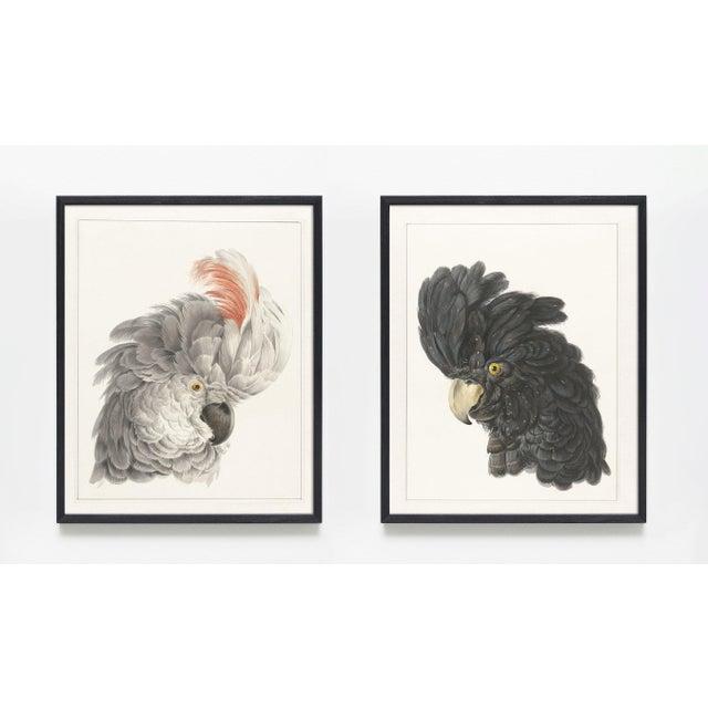 Cockatoo Heads Bird Portrait Prints - A Pair