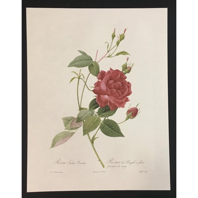 A pair of botanical prints after Pierre-Joseph Redouté. Each print depicts a variety of a pink or white rose with its...