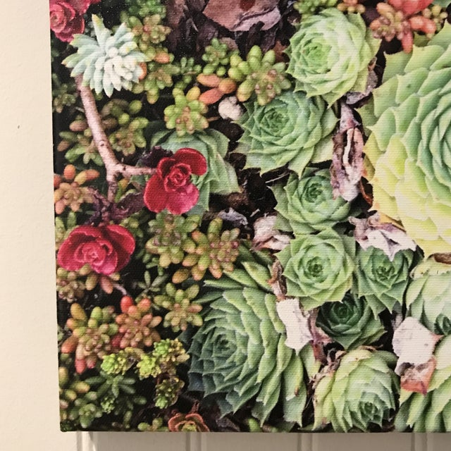 Vivid and high definition succulents canvas art by Emmy award winning Photojournalist Randee Daddona. 12w x 16h ready to...