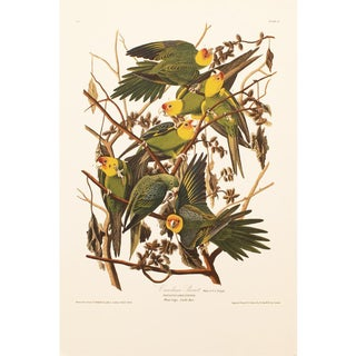 1990s Carolina Parrots by Audubon, Large American Classical Print For Sale
