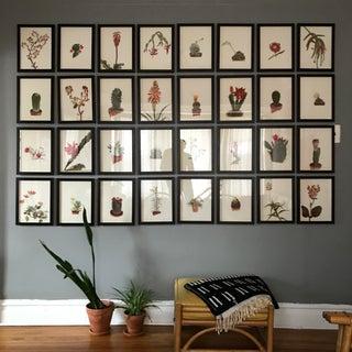 Framed Rock Plants - Set of 32 Preview