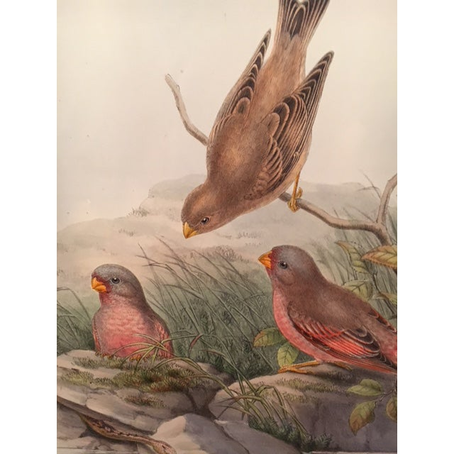 Illustration John Gould & William Hart Bird Illustration in the Age of Darwin For Sale - Image 3 of 11