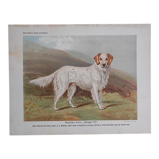 """Antique Dog Lithograph """"English Setter"""" For Sale"""