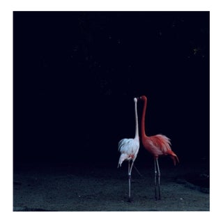 "Nicole Cohen ""Flamingos"" Pigment Print For Sale"