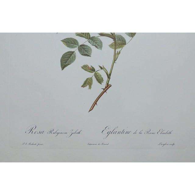 Red Rose Botanical Print - Image 3 of 5