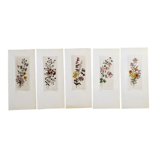 1950s Watercolor Lithographs of Botanical Vignettes - Set of 5 For Sale