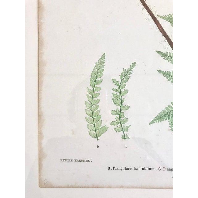 19th Century Bradbury & Evans Nature Printed Fern Print For Sale In Boston - Image 6 of 8