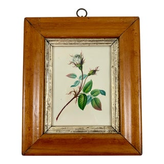 English Regency Period Original Watercolor in Fruitwood Frame - White Hairy Rose For Sale