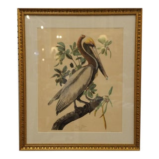 Vintage Brown Pelican Lithograph Custom Framed For Sale