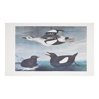 1960s Cottage Style Lithograph of Black Guillemot by John James Audubon