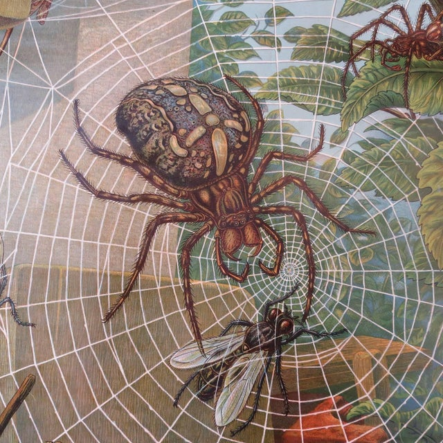 Traditional German Biology Chart of Spiders by Schroder Und Kull, 1910 For Sale - Image 3 of 10