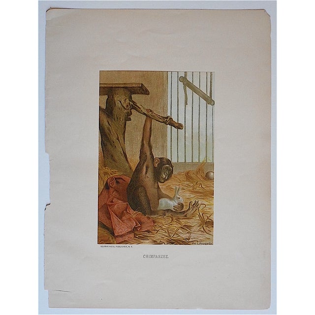 This 19th century chromolithographs (each color laid in with a separate lithographic stone) was printed in America and...