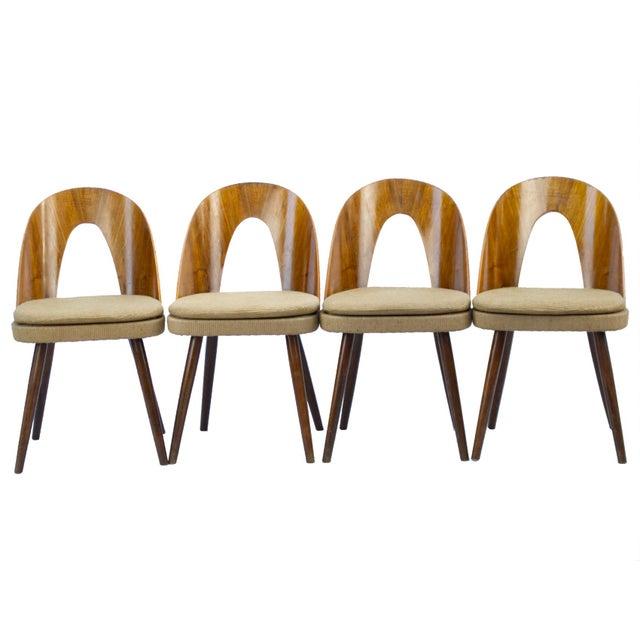 1960s Antonín Šuman for Tatra Nabytok Np Dining Chairs- Set of 4 For Sale - Image 6 of 6