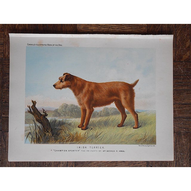 Antique Dog Lithograph - Irish Terrier - Image 2 of 3