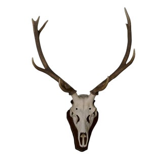 Antique Deer Antlers