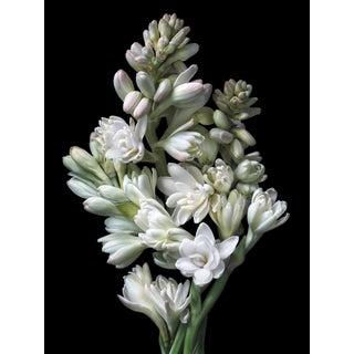 "Photographic Botanical Print, ""Tuberose"" by Artist Debi Shapiro For Sale"