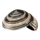 Image of Partially Silvered Sea Shell Architectonica For Sale
