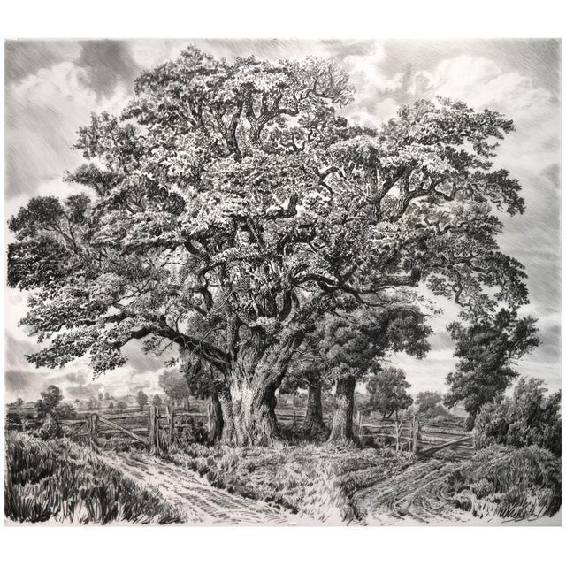 "Mid-Century Modern Contemporary ""Large Oak"" Rick Shaefer Charcoal Print For Sale - Image 3 of 3"