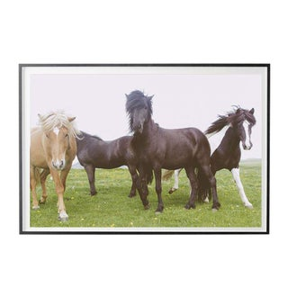 """Wild Horses"" Unframed Photographic Print For Sale"