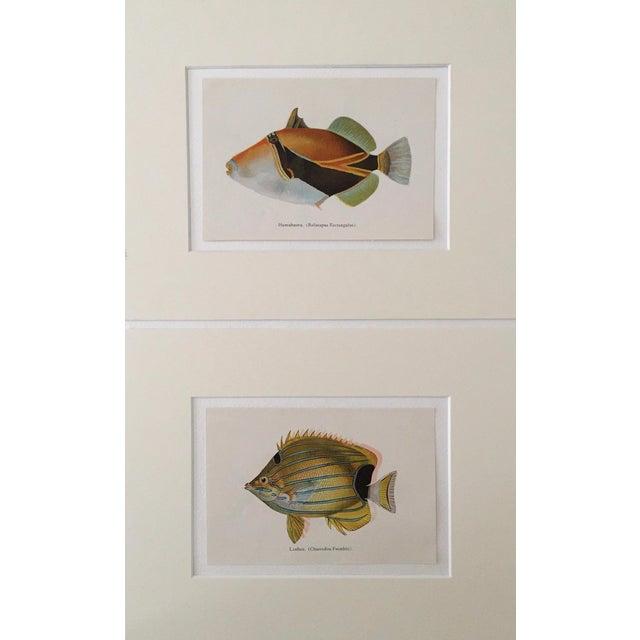 Hawaiian Fish Lithographs - A Pair - Image 1 of 5