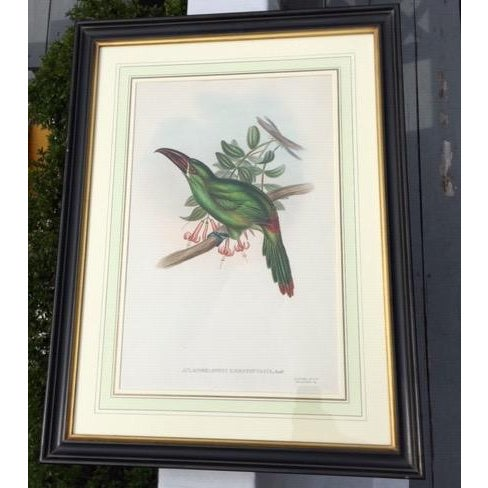 19th Century Antique Hand-Colored Toucan Lithograph by John Gould For Sale - Image 9 of 9