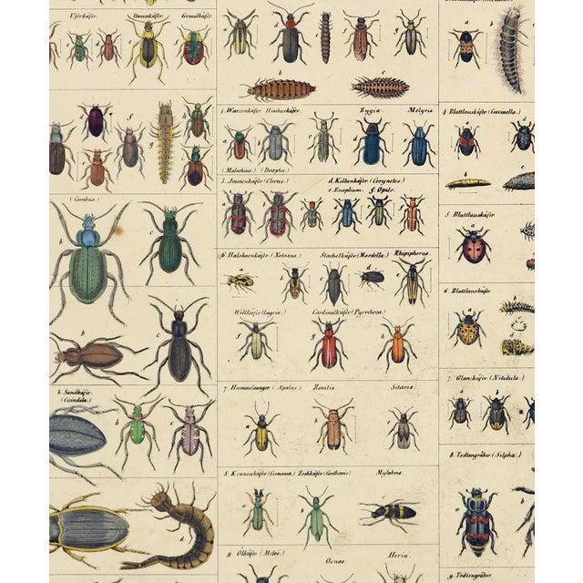 """Original hand-colored steel engraving from Oken's """"Allgemeine Naturgeschichte. VI Insekten"""", ca 1850. Lorez Oken was a..."""