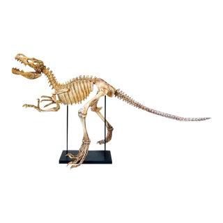 5 Foot Long Sculpture Dinosaur T-Rex Skeleton Cast Statue For Sale