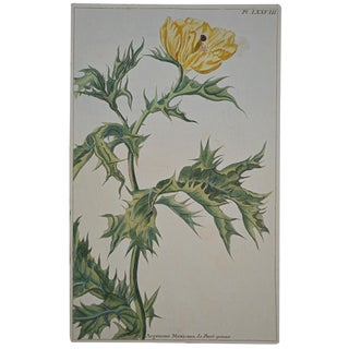 "Rare 18th Century Hand Colored Botanical Engraving Plate LXXVIII From ""Jardin D'Eden"" by Pierre Joseph Buchoz For Sale"