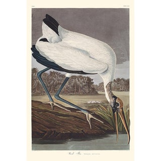 Audubon Havell Edition Wood Ibis, Framed For Sale