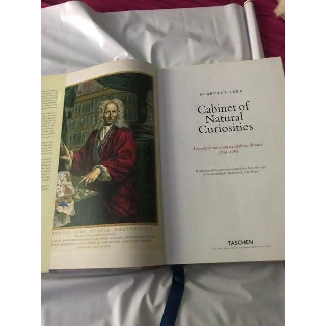 2000 - 2009 2001 Jumbo Cabinet of Natural Curiosities Book by Albertus Seba For Sale - Image 5 of 6