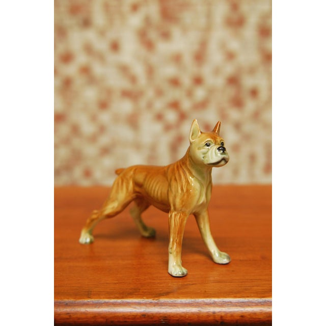Diminutive muscular and fit Boxer dog figurine made out of porcelain. Hand painted details on Boxer face of loyalty and...