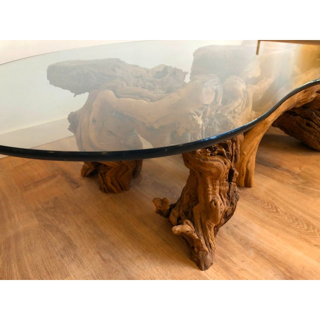 Wood Vintage Burl Wood Root and Tempered Glass Coffee Table. For Sale - Image 7 of 10