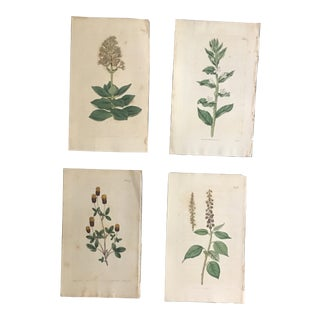 """Botanical Engravings on Paper from """"The Botanical Magazine"""" by William Curtis - Set of 4 For Sale"""