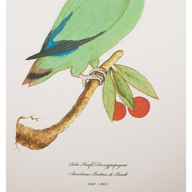American Classical 1590s Large Print of Red-Headed Lovebird by Anselmus De Boodt For Sale - Image 3 of 6