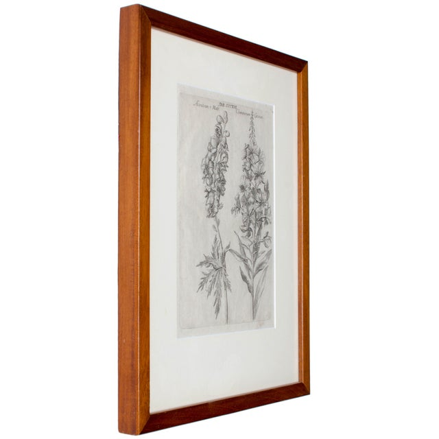 1719 De Bry Botanical Engravings - a Pair For Sale - Image 5 of 6