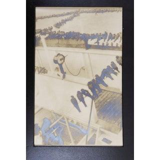 1926 Birds During Hurricane Photographs - a Pair Preview