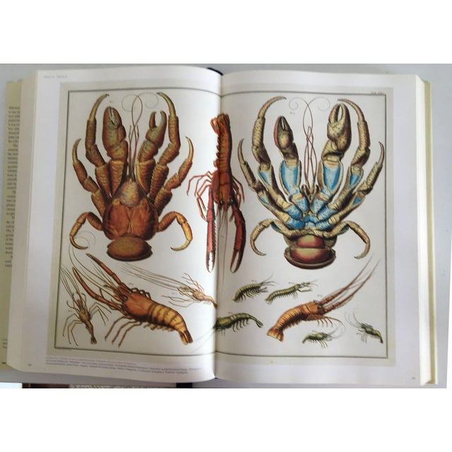 Moving Sale - Cabinet of Curiosities Book by Albertus Seba - Image 3 of 11