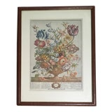"Image of Vintage Robert Furber ""April"" Framed Botanical Print For Sale"