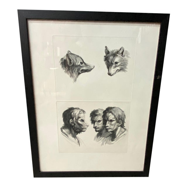 Man as Fox - Physiognomic Heads Series Framed Illustration by Charles Le Bru For Sale