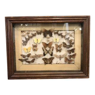 Antique Framed Butterfly Collection in Wooden Shadow Box For Sale