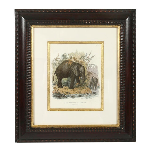 Set of Three Animal Prints in Mahogany Frames For Sale - Image 4 of 5