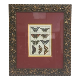 1800s Hand Painted Butterfly Lithograph For Sale