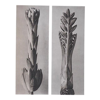 Vintage Modernist Photogravures by Karl Blossfeldt-Extreme Close-Up C.1942-Printed One Side Only For Sale