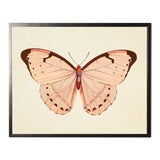 Image of Horizontal Pink Butterfly Print in Pewter Shadowbox For Sale
